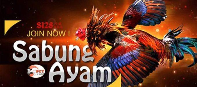 Situs S128 Sabung Ayam Online