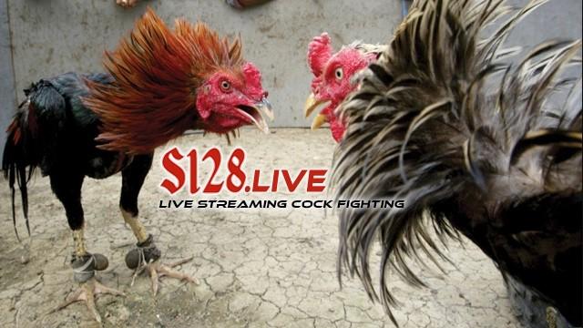 Agen Sabung Ayam S128 & S1288
